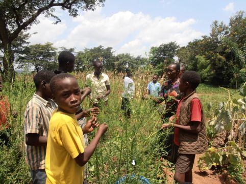 Iname erntet mit den Kindern Artemisia zur Malariabehandlung